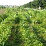 アトピー改善のためのお野菜の選び方